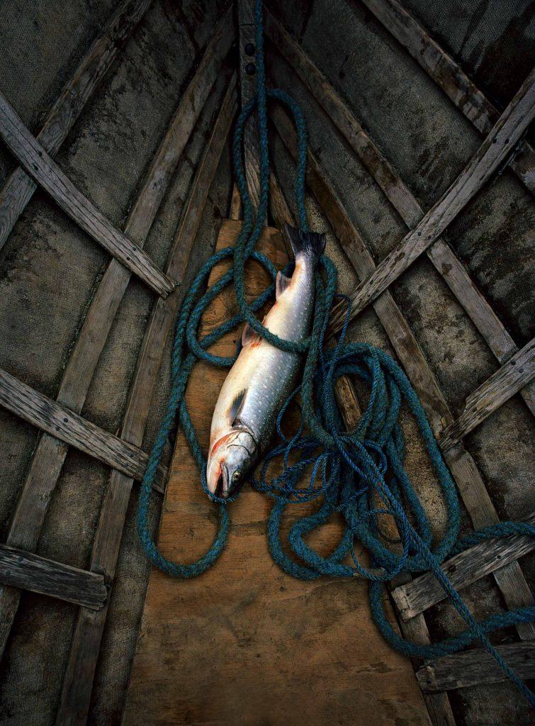 Fish on floor of fishing boat