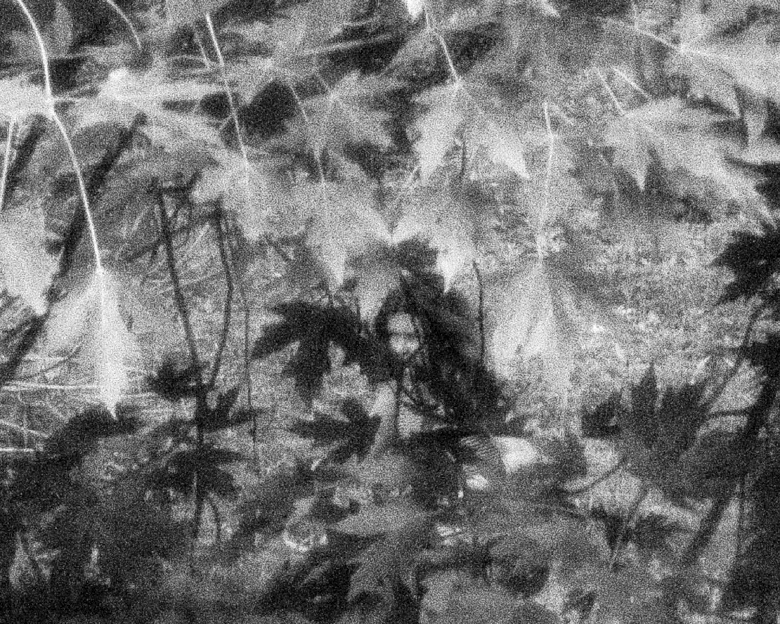 Black and white photo of a woman obscured by leaves